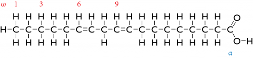 Structural formula of Linoleic Acid, a double unsaturated fatty acid.