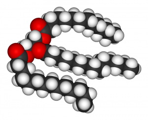 Three dimensional illustration of a triglyceride molecule.